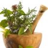 Тонизирующие травы: помощь природы